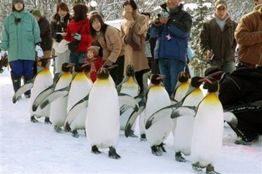 fat penguins exercising